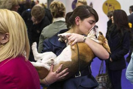 A woman kisses a Beagle after the judging.