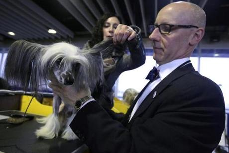 Karen Spinazzola, background, and David Bowen, of Cleveland, Ohio, groom Vinny, a Chinese Crested.