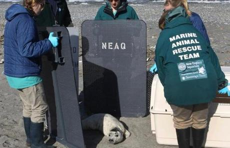 "Workers used nylon ""crowder boards"" and a dog kennel to rescue the animal."