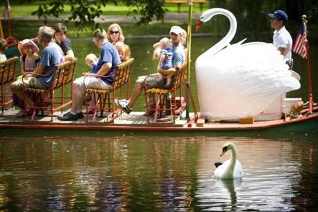 Swan boats in Boston's Public Garden.