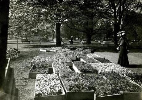 Undated: This vintage photo shows boxes of pansies and other flowers ready for planting in the Public Garden and women who stopped to admire the array.