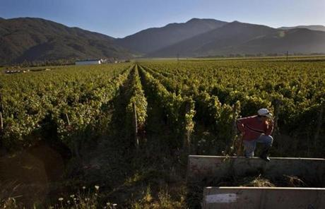 A worker rested at a vineyard owned by Edward Tutunjian, about 120 miles south of Santiago, Chile.