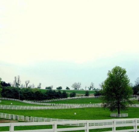 White rail fences carve up the green pastures of Kentucky's Bluegrass Country, where limestone bedrock benefits the region's famed verdant landscape, racehorses, and bourbon.