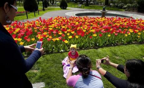 4/29/2013 - Boston, MA - Boston's Public Garden - Six-month-old Amanda Aglugub, cq, has her picture taken by her mother, grandmother and aunt in front of the tulips in Boston's Public Garden. From left: Rosita Deguzman, cq, (grandmother), of Orlando, FL; Kathrine Aglugub, cq, (mother), of Quincy, MA; and Jo Deguzman, cq, (aunt), of Orlando, FL. Tourists and locals alike flocked to Boston's Public Garden to enjoy and photograph the tulips, many of which were in full bloom on Monday, April 29, 2013. Dina Rudick/Globe Staff
