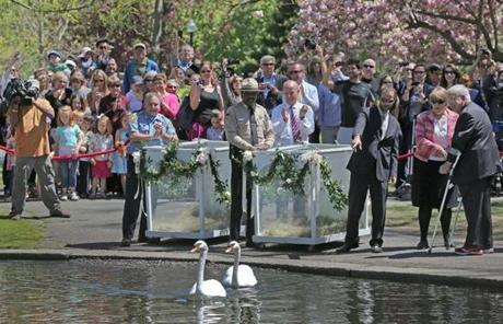 Swans Romeo and Juliet returned to the Boston Public Garden today in a sure sign of spring.
