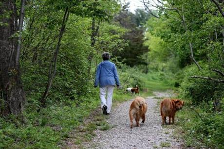 Whitney and Thayer Woods offer a outdoor experience to visitors including dogs.