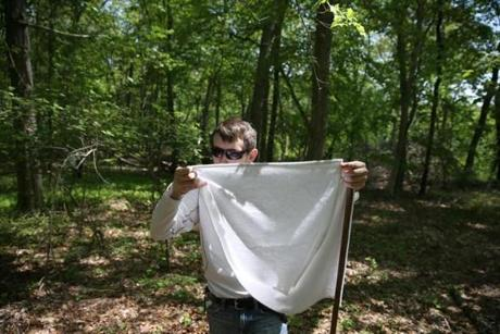 University of Rhode Island graduate Chris Schuttert collected ticks with a canvas flag.