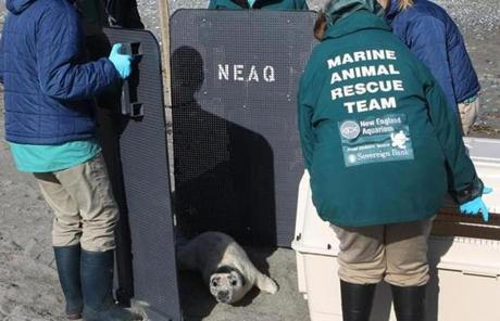 New England Aquarium staff rescued the pup.