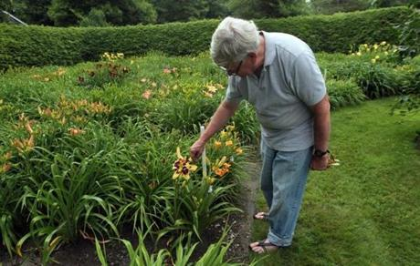 Stephen Tooker in his lily garden in Scituate.