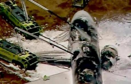 Television footage showed the top of the fuselage was burned away and the entire tail was gone