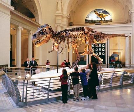 You can see the largest, most complete Tyrannosaurus dinosaur ever discovered at the Field Museum.