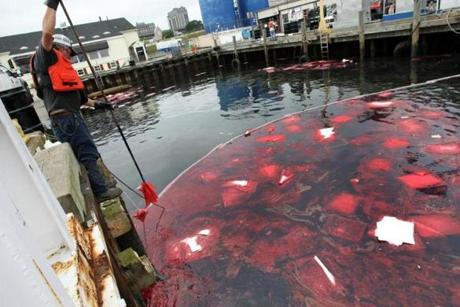 An apparent diesel spill consisted of red blobs of oil in New Bedford harbor.