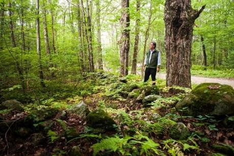 David Foster, director of Harvard Forest, stood near a rock wall that had been a fence in a pasture during the 1800s, in an area now overtaken by trees.