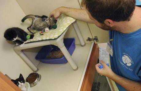 Tom Mansfield, animal caretaker, plays with kittens at Gloucester's Rich Animal Shelter.