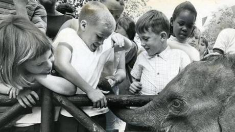 September 17, 1967:  Mini, the 335 lb. baby elephant, had an official dedication at the Franklin Park Children's Zoo. Mini was donated to the zoo by the employees of Bradlees and Stop & Shop. The children were tickled - literally - by the zoo's new addition.