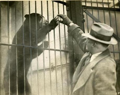 April 2, 1929: Zoo curator Daniel Harkins said good morning to Yvette the sun bear with an apple and a high five. When the zoo opened in 1912, the pens were state-of-the-art.