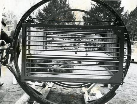 March 30, 1966:  Togo the lion was seen in the new squeeze cage at Franklin Park Zoo. Only the second of this type of cage built it had a movable side which could be cranked up against an animal to immobilize it. Once immobilized an animal could then be injected with a tranquilizer and get medical treatment if needed. Having a tooth pulled or a paw examined made the whole process that much safer for the zoo veterinarians.