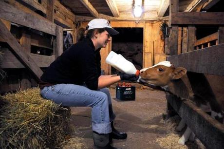 Laura Pratt of Norwell feeds two young cows milk in the barn.