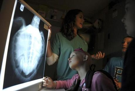 Delia Binette, 6, of Saco, Maine, looked at an X-ray of a sea turtle as New England Aquarium biologist Tina Wilkins explained how the staff takes care of sick animals.