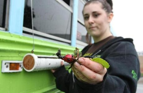 Emma Coutu showed off a radish grown outside the bus on window planters.