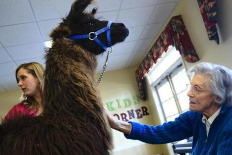 Llamas are used in animal therapy at Life Care Center of Nashoba Valley. The facility tailors care and activities to individual personalities.