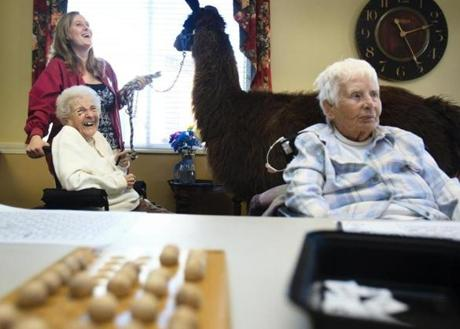 Gert Diette, left, a resident at Life Care Center of Nashoba Valley, chuckled as she took a break from her bingo game to be introduced to Travis the llama, who was led around the nursing home by Nikki Gibbons, an activity coordinator and
