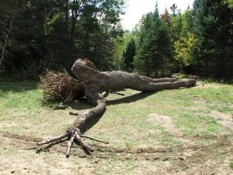 "The collapse of his 35-foot wooden sculpture ""Giant"" in Vermont was a hard blow to Wheelwright."