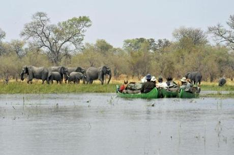 The tour group in their canoes stop to observe a herd of elephants.