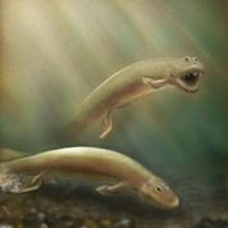 An illustration depicts Tiktaalik roseae.