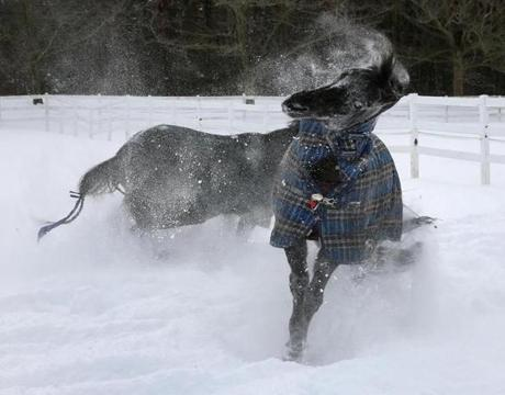 A horse named Tucker shook his head while playing in the fresh snow at Briggs Stables in Hanover.