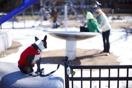Boston, a Boston terrier, watched his humans, Christie Kemple, and her daughter, Olivia Bigelow, 8, as they played on the Esplanade Playspace.