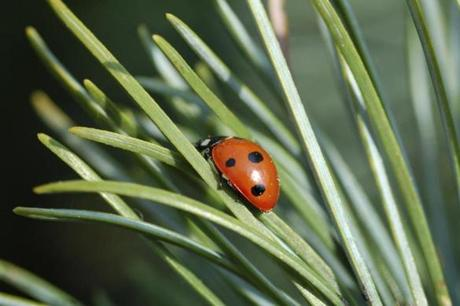Adding ladybugs to your yard can help combat pests.