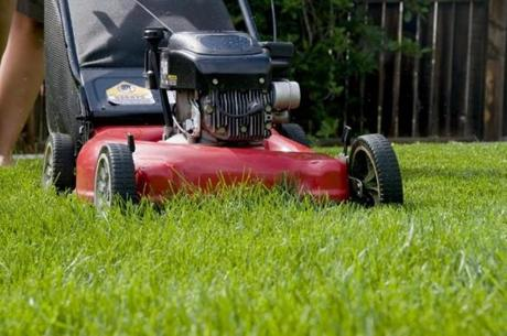 Keep lawn mower blades sharp; dull ones tear the grass, weakening it.