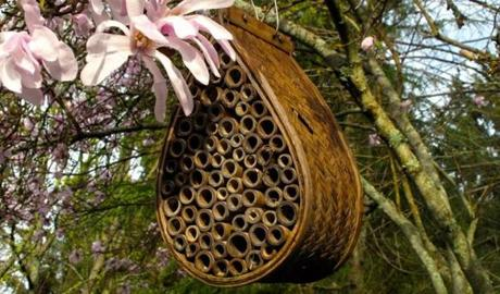 A nest of tunnels made of bamboo provides an inviting habitat for several kinds of bees.