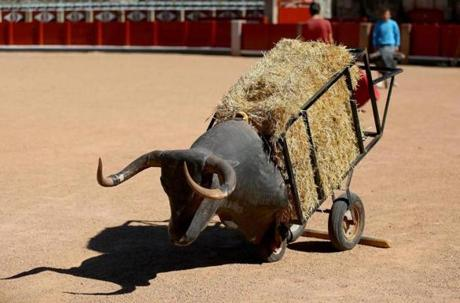 "A wooden, straw-filled practice ""bull"" sits unused at Salamanca's Plaza de Toros, as bullfighters practice behind it."