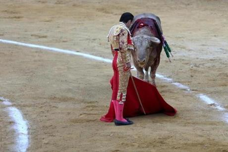 Animals rights activists say the fight that ends here was never fair. The bull has been stabbed many times in his shoulders and back before matador Enrique Ponce stands to face him, pictured here, before the final, fatal plunge of the sword.