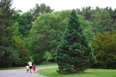 A family walks in the Roslindale section of the Arnold Arboretum.