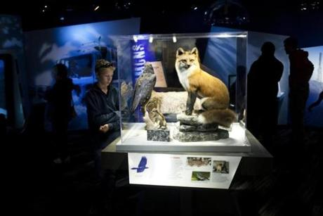 The Mount Washington museum features exhibits showcasing the peak's extreme weather and wildlife.