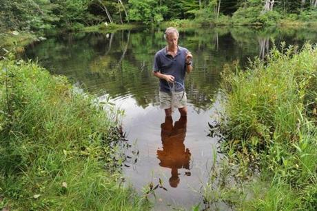 Bowdoin College biology professor Nat Wheelwright looked for frogs by his backyard pond in Brunswick, Maine, where earlier this summer an estimated 200,000 wood frog tadpoles died in less than a day. The tadpoles tested positive for ranavirus.