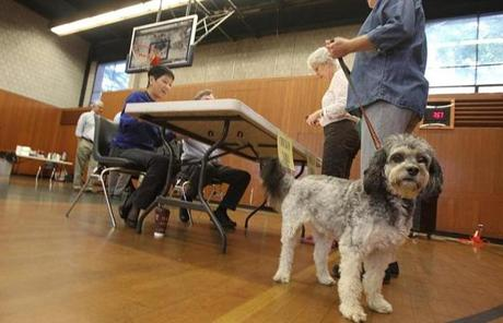 Abby Cohen, with her dog Jazzie, voted at Hyde Community Center in Newton.
