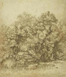 Harvard Art Museums Titian (Tiziano Vecellio), Trees Near a Pool of Water, c. 1530. Brown ink over charcoal. Harvard Art Museums/Fogg Museum, Bequest of John and Alice Steiner, 2004.67. Photo: Harvard Art Museums, © President and Fellows of Harvard College. (75720) -- 02HarvardArtReview