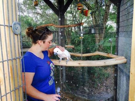 01parrots - Stephanie Stowell of Fort Meyers visits with a cockatoo at the Bird Gardens of Naples. (Nancy Heiser for The Boston Globe)