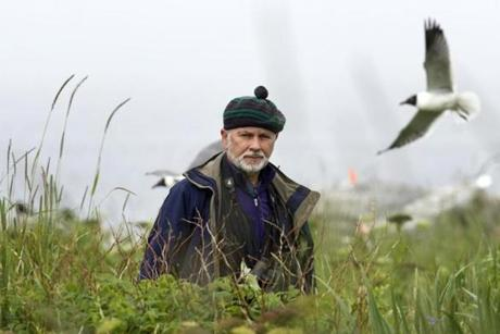 In this July 3, 2013, photo, Dr. Steve Kress walks through tall vegetation on Eastern Egg Rock, a 7-acre island where he led the successful effort to recolonize puffins off the Maine coast. Forty years ago Kress and his team of researchers began transplanting puffin chicks from Newfoundland to man-made burrows on the remote island in Muscongus Bay. (AP Photo/Robert F. Bukaty)
