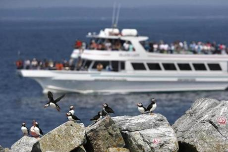 In this photo made Friday, Aug. 1, 2014, a puffin-viewing tour boat passes Eastern Egg Rock, a small island off the coast of Maine. Puffins were successfully re-introduced to the island 40 years ago. (AP Photo/Robert F. Bukaty)