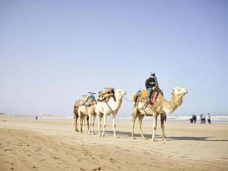 Camel rides on the beach in Essaouira.