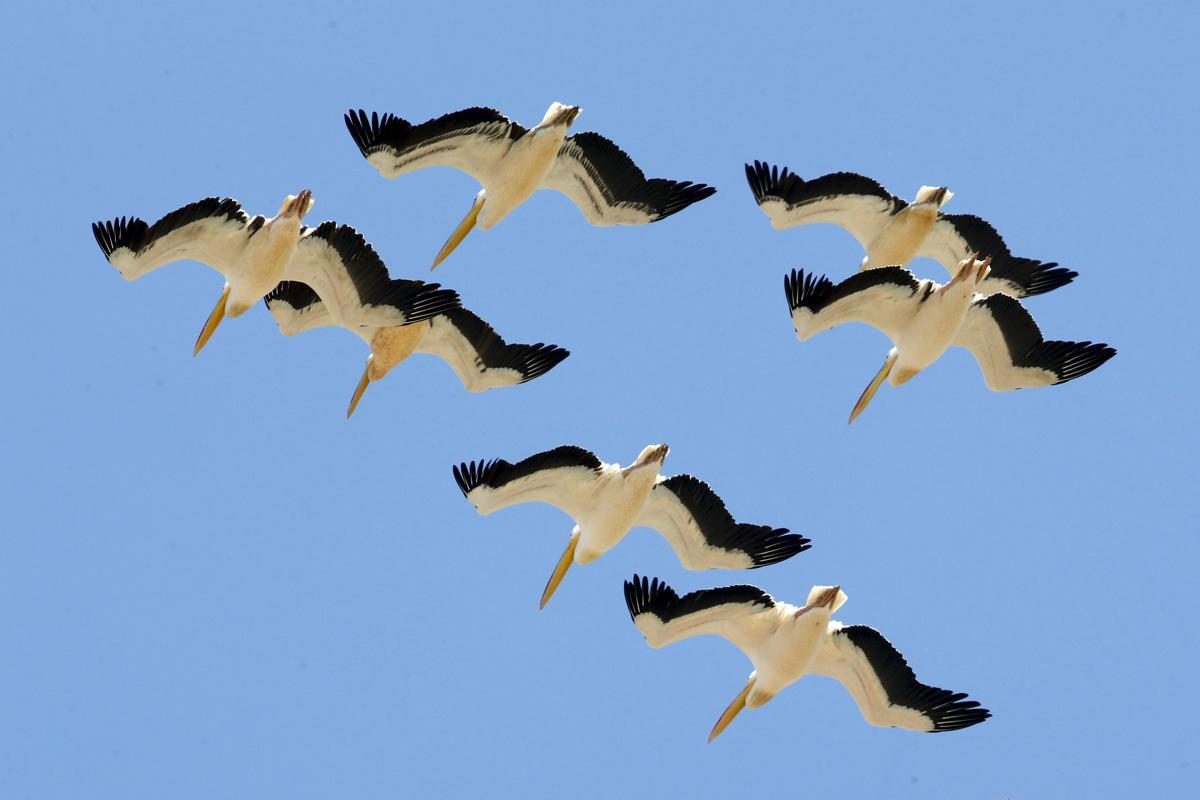 [IMG] loài chim - Kho Shutterstock Giá Rẻ - Mua bán tài nguyên đồ họa Vector, PSD