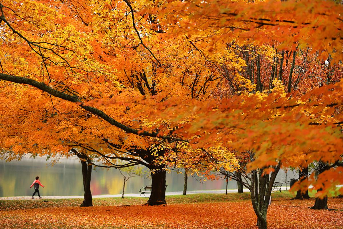 Image result for boston.com, pictures, autumn
