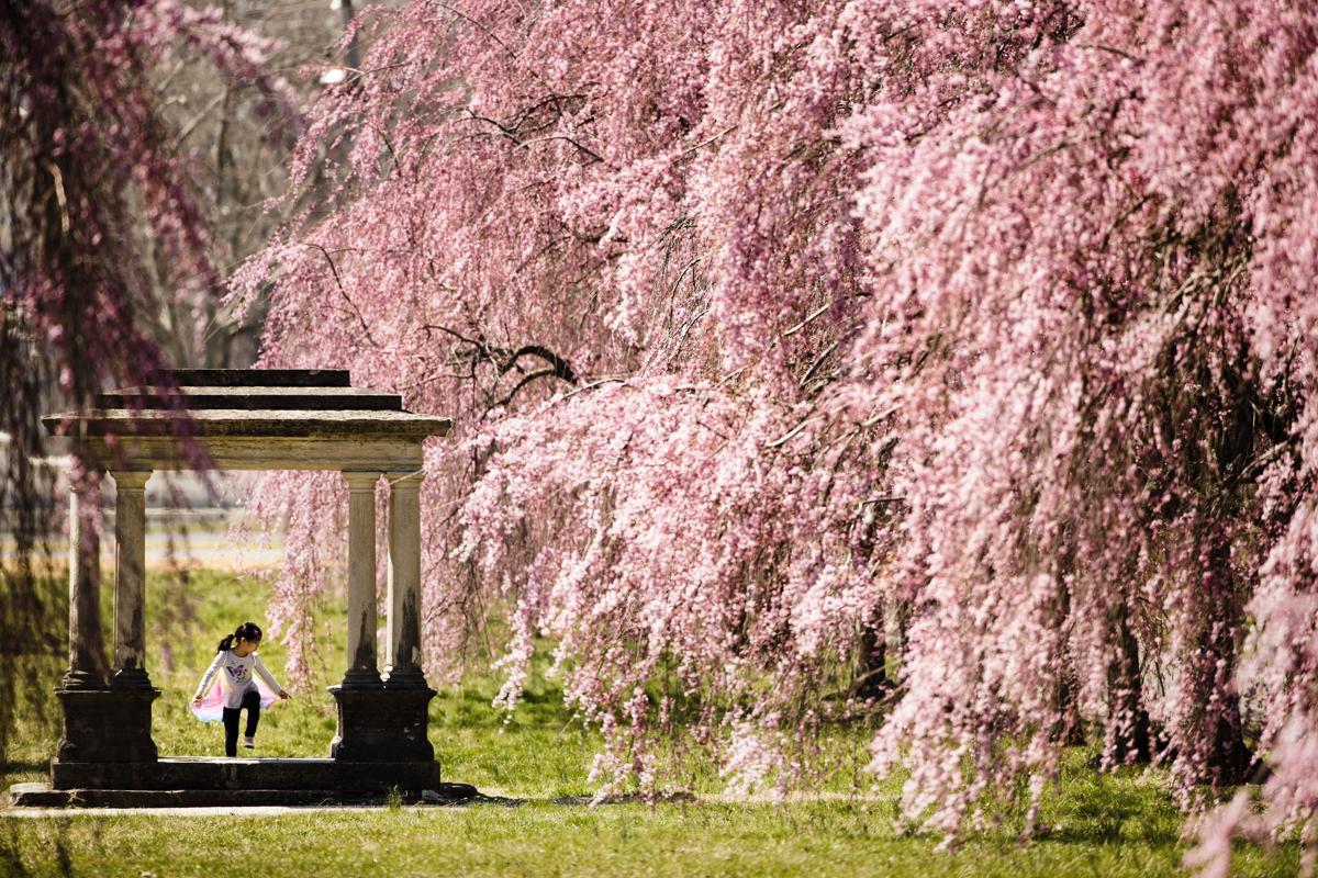 Spring blossoms - The Boston Globe