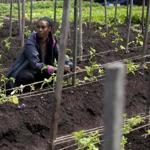 Belene Tesfaye, an apprentice farmer with City Growers, carefully tends to her plot. Zoning changes lowered the barriers for establishing commercial farms in Boston.