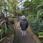 Elle Thompson, 7, visited the Wellesley College Greenhouses with her grandmother in early January.